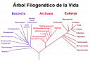 800px-phylogenetic_tree-es.png