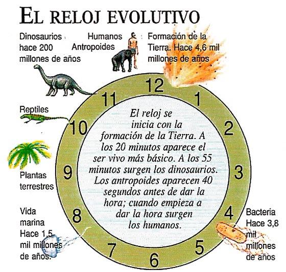 https://matragut.files.wordpress.com/2010/05/relojevolutivo_big.jpg