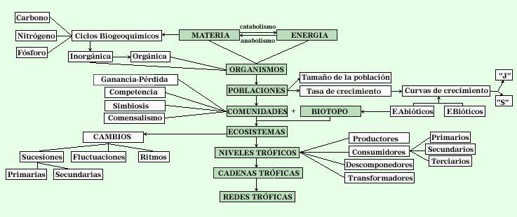 dinamica poblacion bosque tropical: