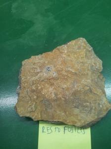 Caliza con fósiles