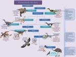 esquema-evolucion-aves