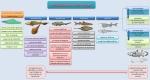 esquema-evolucion-peces