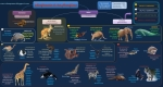 esquema-mamiferos-clasificacion